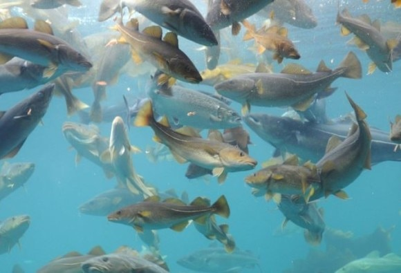 Climate Change May Shrink the World's Fish