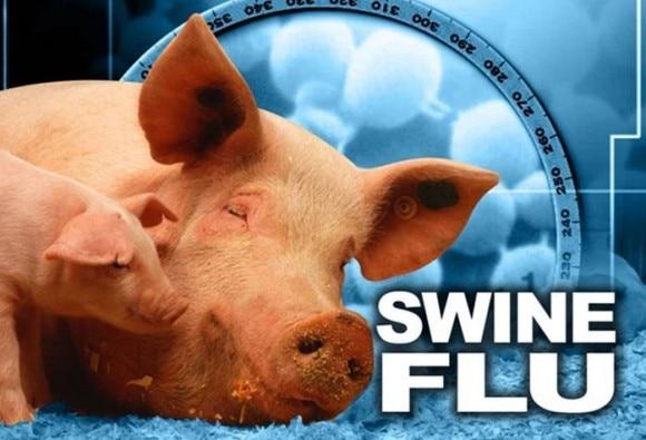 Swine flu cases rise 14-fold in a year