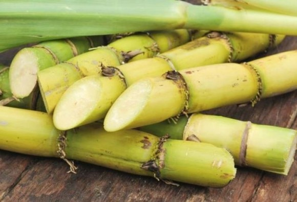 Suffering From Stress, Lack of Sleep? This Sugarcane Component May Help You