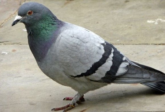 Conductor fined for not charging Pigeon ticket on a bus in Tamil Nadu