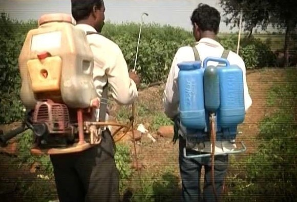 Maharashtra: 34 farmers in Vidharba die due to pesticide poisoning