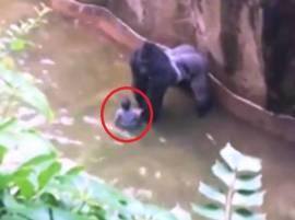 দেখুন: গোরিলার খাঁচায় ৪ বছরের ছেলে, শিশুটিকে বাঁচাতে গুলি করে হত্যা গোরিলাকে