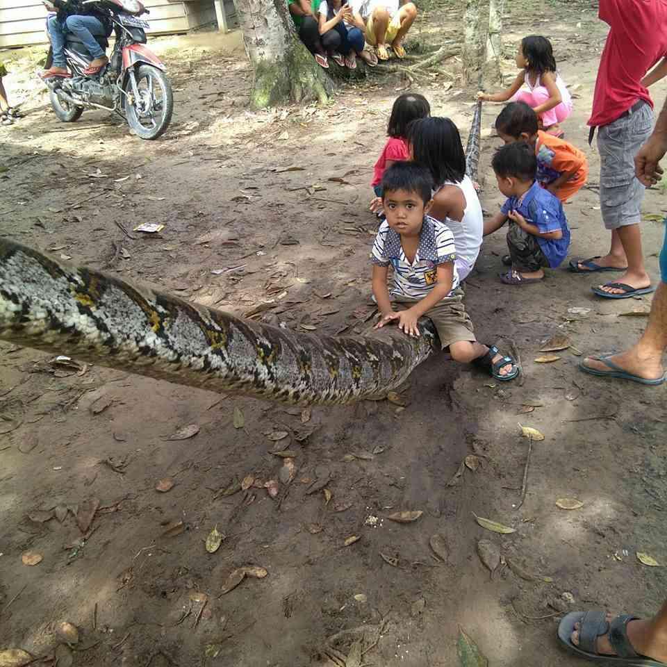 python 5