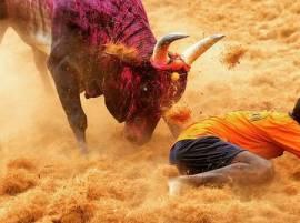 জয়পুরে ষাঁড়ের গুঁতোয় আর্জেন্টাইন পর্যটকের মৃত্যু