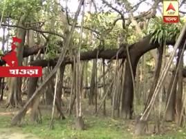 শিবপুর বোটানিক্যাল গার্ডেনে ২৫০ বছরের বটগাছকে বাঁচাতে লাগানো হচ্ছে ওষুধ