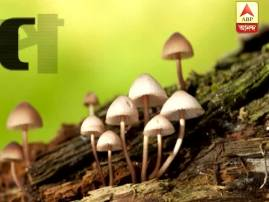 5 die after consuming poisonous mushroom