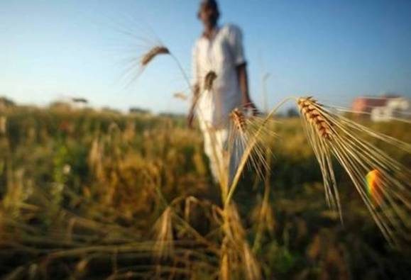 893 crore rupees Compensation to farmers under national agricultural insurance scheme