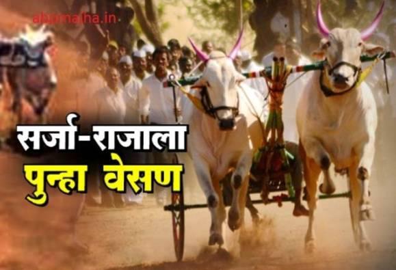 No bullock cart race in Maharashtra, Mumbai high court extends ban
