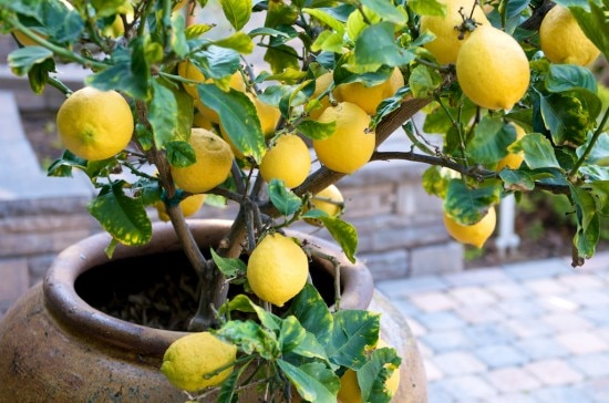 benefits of growing your own fruits and vegetable