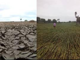 दुष्काळ कुठलाही असो, शेतकऱ्याला मारतोच...!