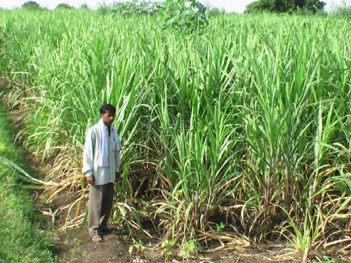 Rajendra Jadhavs blog on Sugar factory & government strategy