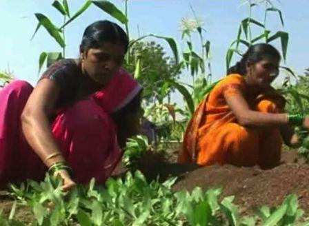 Nalawde familys success story in sangli district