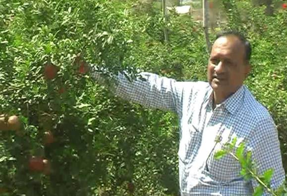 dhules pomegranate farmers success story