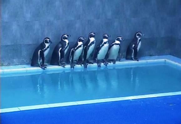 penguin in Rani zoo