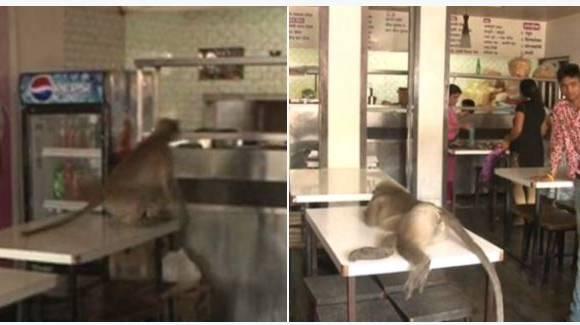 माकड आलं, आईस्क्रीम खाल्लं, फॅनच्या वाऱ्याला झोपून गेलं!