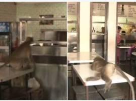 आईस्क्रीम पार्लरमध्ये माकडाची वामकुक्षी