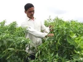 शेतीतला 'सचिन', मिरची लागवडीतून 4 महिन्यात 6 लाखांचं उत्पन्न!
