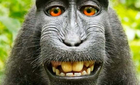 monkey selfie case British photographer settles with animal charity over royaltie