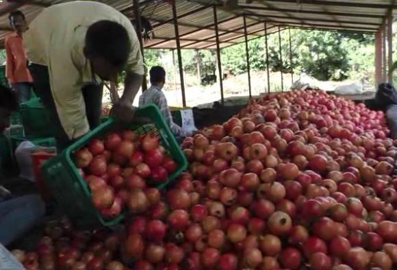 Indapur China farmer 1