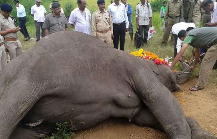 Elephant dies after being hit by train in Belgaum
