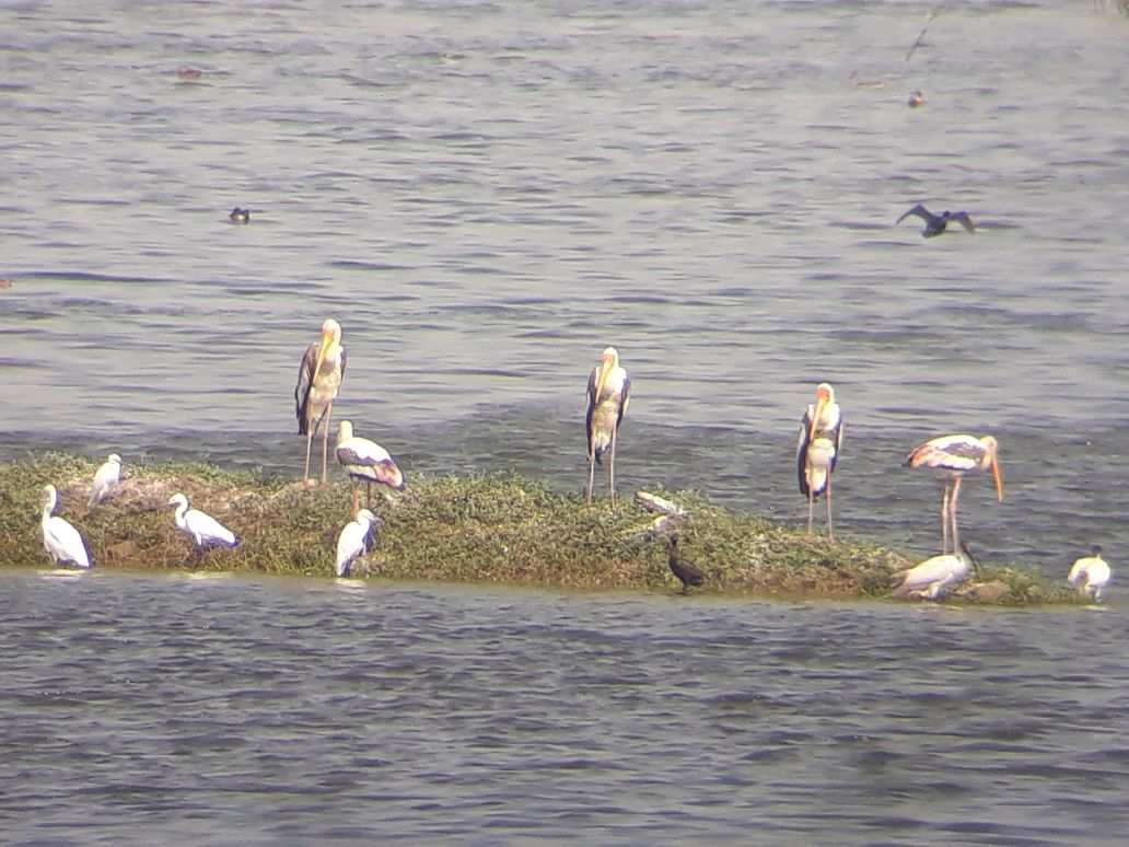 pics of foreign birds in Nandur madhmeshwar