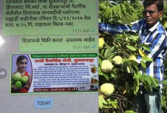 farmer uses whatsapp to selling clustered apple fruit