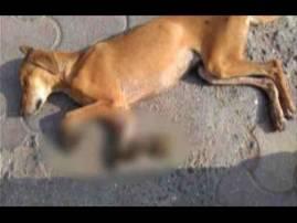 भटक्या कुत्र्याचे पंजे कापले, मीरा-भाईंदरमधील अमानवी कृत्य