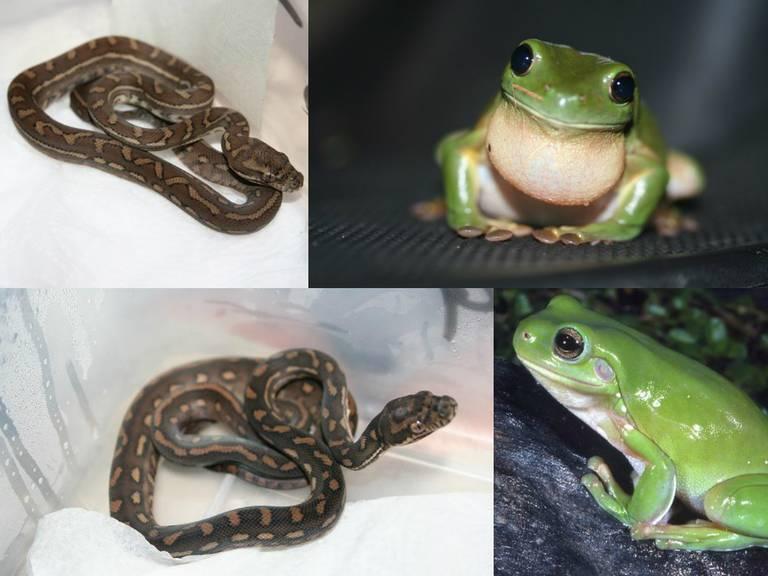 frog_python