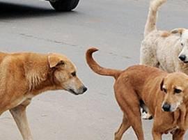 ਪੰਜਾਬ 'ਚ 1,12,000 ਆਵਾਰਾ ਕੁੱਤੇ, ਹਾਦਸਿਆਂ ਦਾ ਬਣ ਰਹੇ ਕਾਰਨ