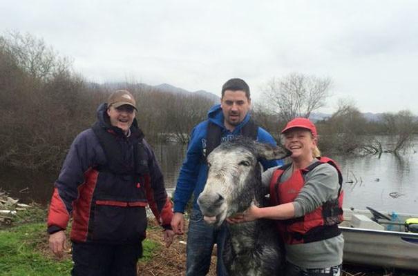Rescued_Donkey_Smile_Camera-3-605x400