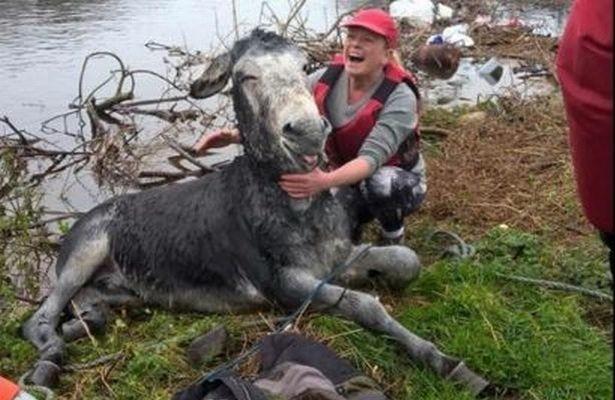 Rescued_Donkey_Smile_Camera-4-615x400
