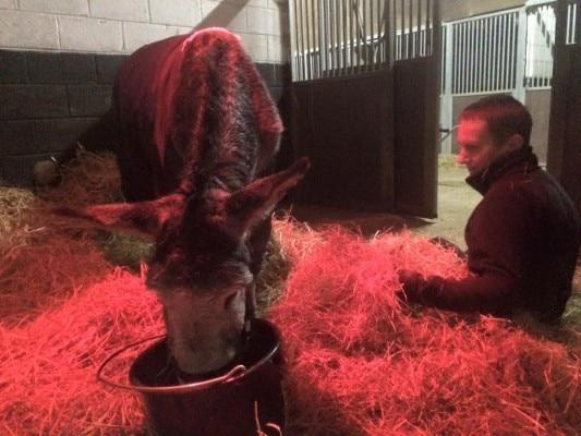 Rescued_Donkey_Smile_Camera-6-533x400
