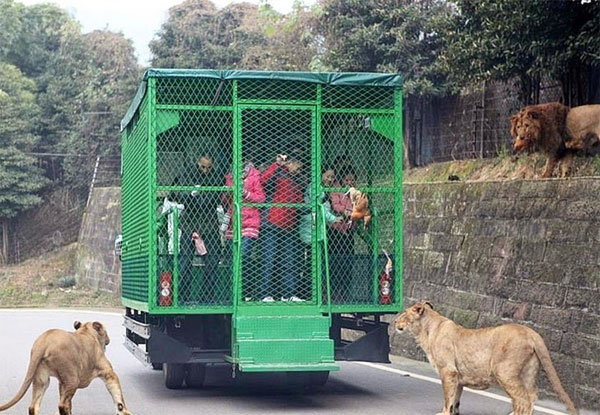 visitors-cage-chinese-zoo5
