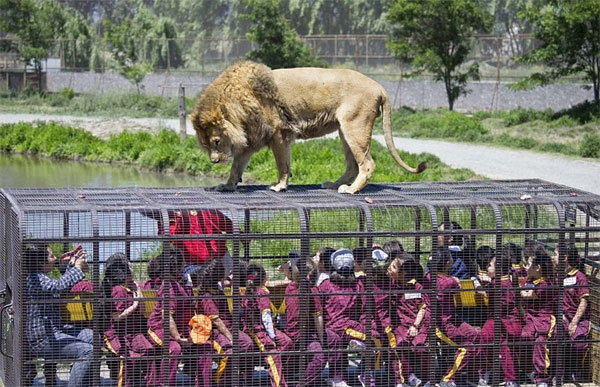 visitors-cage-chinese-zoo6