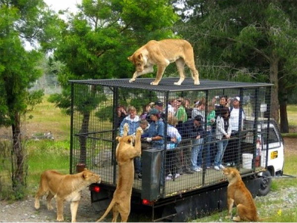 visitors-cage-chinese-zoo7