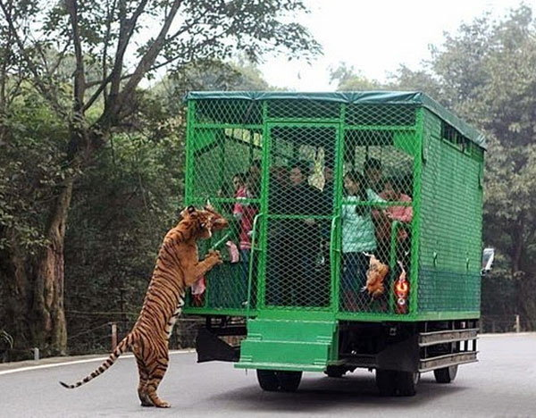 visitors-cage-chinese-zoo8