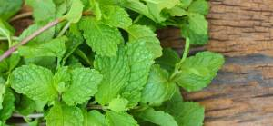 Can-Mint-Leaves-Help-Cure-Acne-Scars-300x140