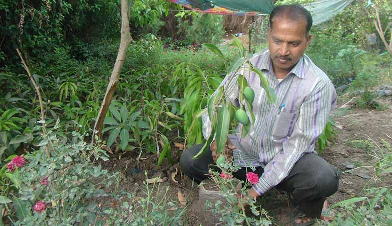 kota-farmer-evergreen-mango