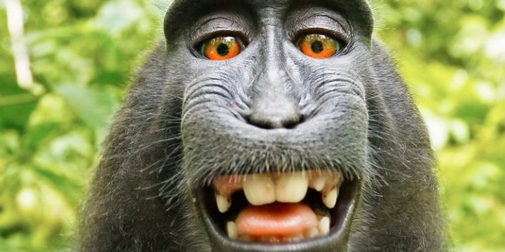 a-photographers-life-livelihood-and-bank-account-are-in-tatters-because-a-monkey-took-a-selfie-with-his-camera-and-is-suing-him-for-it