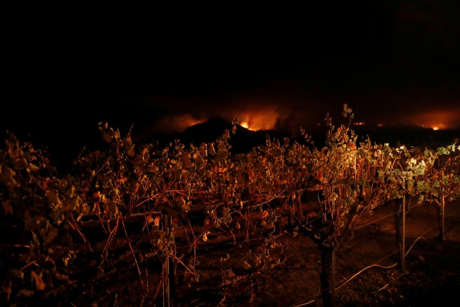 Vines are seen at a vineyard during the Nuns Fire in Kenwood, California