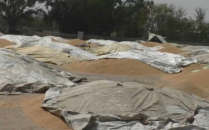 6-farmer-waiting-for-lifting-in-gain-market-in-Talwandi-Sabo