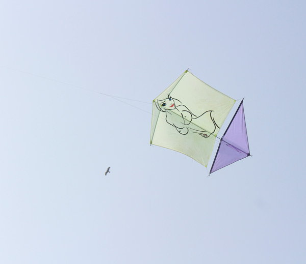 5-kite with nude iamge fly in international kite festival 2017 held in vadodara