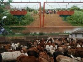 છત્તીસગઢમાં ગૌશાળામાં 200 ગાયના મોત, BJP નેતાની ઘરપકડ