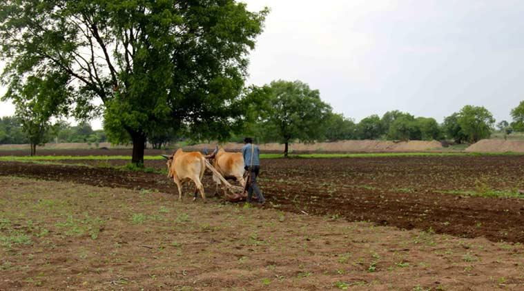cotton-farmer-759