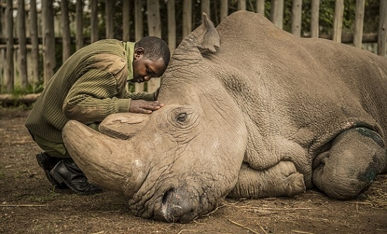 6-worlds-last-male-northern-white-rhino-dies