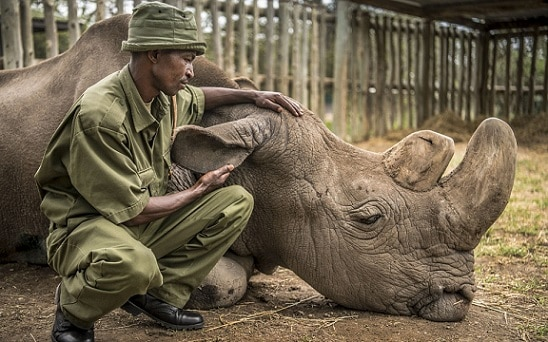 7-worlds-last-male-northern-white-rhino-dies