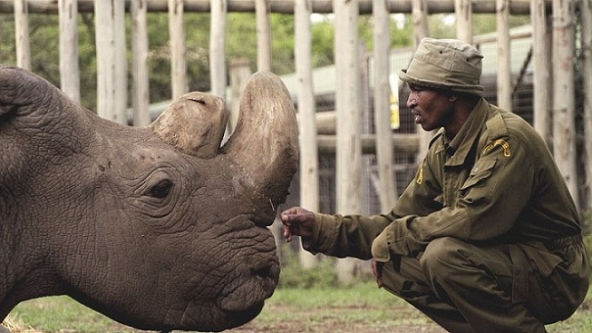8-worlds-last-male-northern-white-rhino-dies