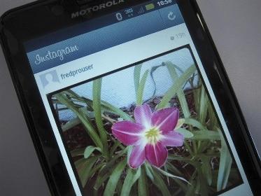 Arabic hashtags hiding porns on Instagram